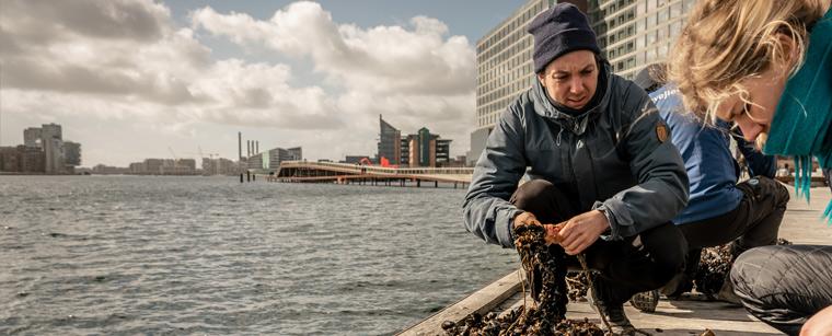 Medlem af Havhøsts bio board Sune Agersnap