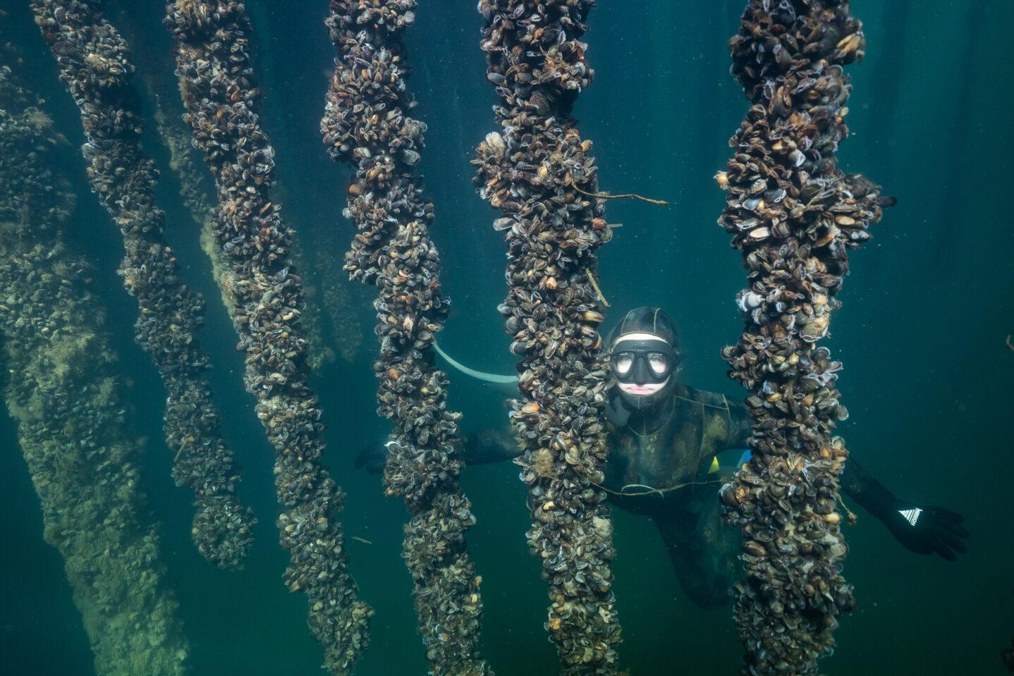 Undervandsfoto fra Bølgemarken i København (fotograf: Lars Hestbæk)