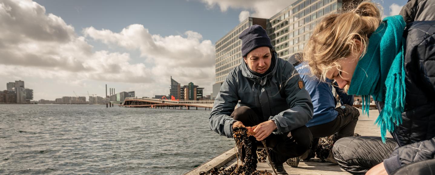 Sune Agersnap fra Havhøsts bio board til arbejdsdag på Bølgemarken i København