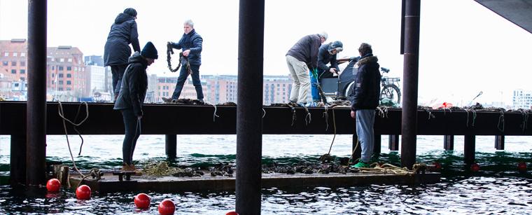 Medlemmer af Havhøst gør klar på Bølgemarken