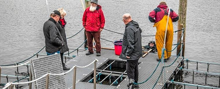 Løgstør fjordhave