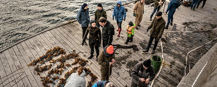 Arbejdsdag for medlemmer på Bølgemarken i København