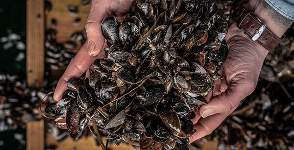 Muslinger i favnen