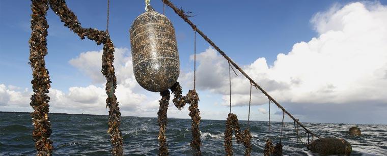 Line med muslingestrømper i havmark